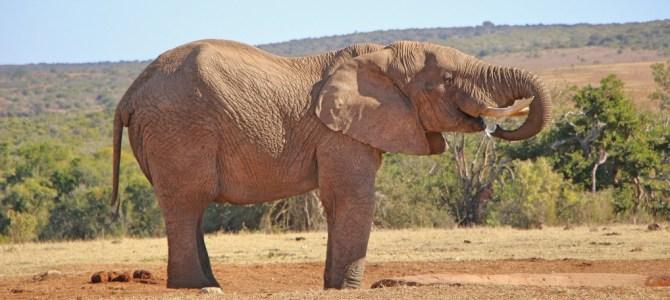 Dica de safári na África do Sul: Addo Elephant Park