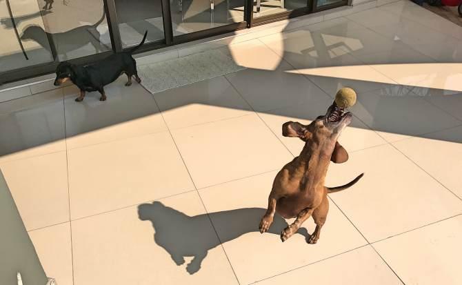 Cuidar de cachorros workaway