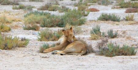 Safári na Namíbia: Etosha e Caprivi