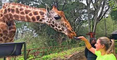 Giraffe Center, em Nairóbi, no Quênia