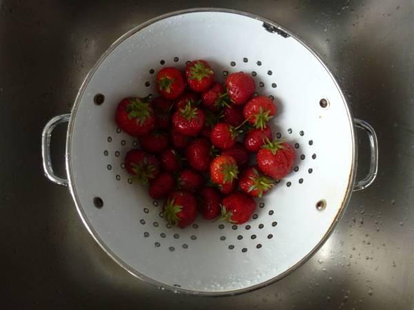 Terracina strawberries