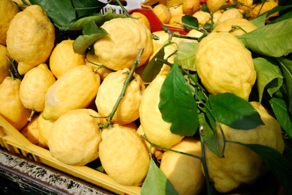 Lemons are in season · www.italyfoodandwinetours.com