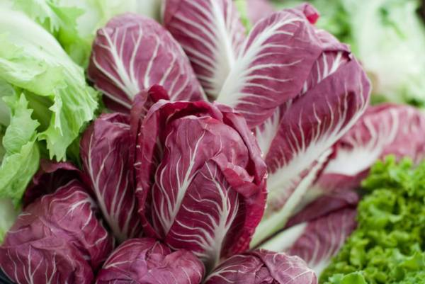heads of radicchio