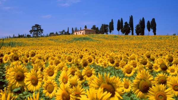 Ferragosto in the country · www.italyfoodandwinetours.com