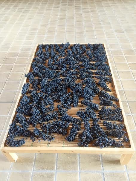 Wine in Umbria – Paolo Bea