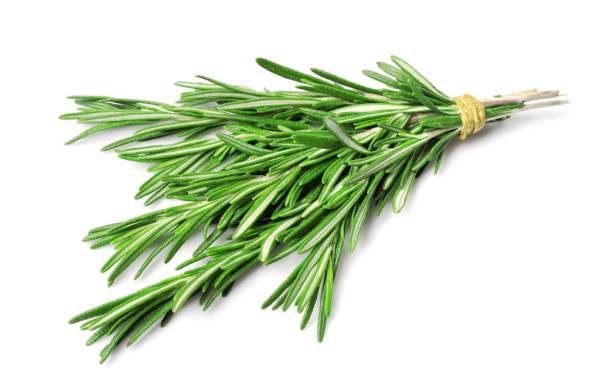 The Herb Garden - Rosemary · www.italyfoodandwinetours.com