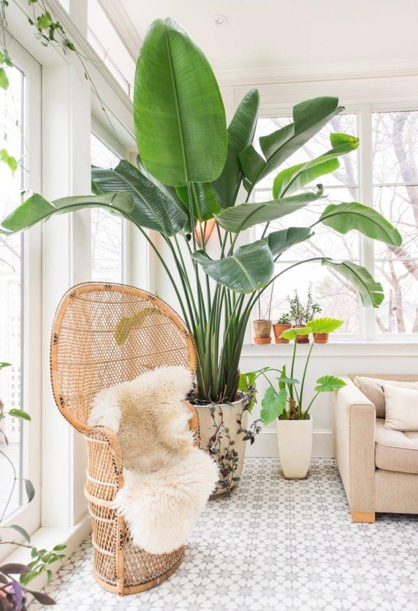 decora con plantas tu casa