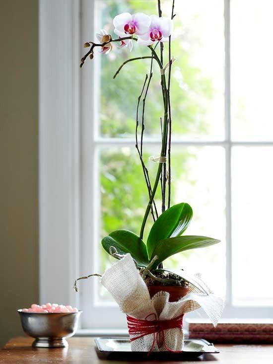flores y detalles románticos
