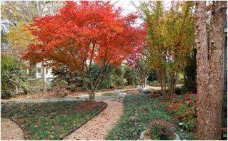 Hojas de otoño en el jardín