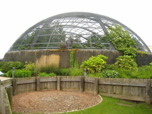 C mo hacer un invernadero casero for Plantas para invernadero