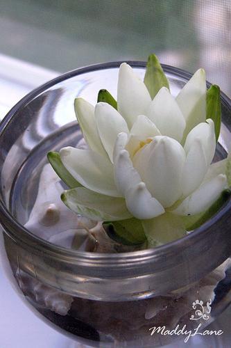 Flor de jamin en agua