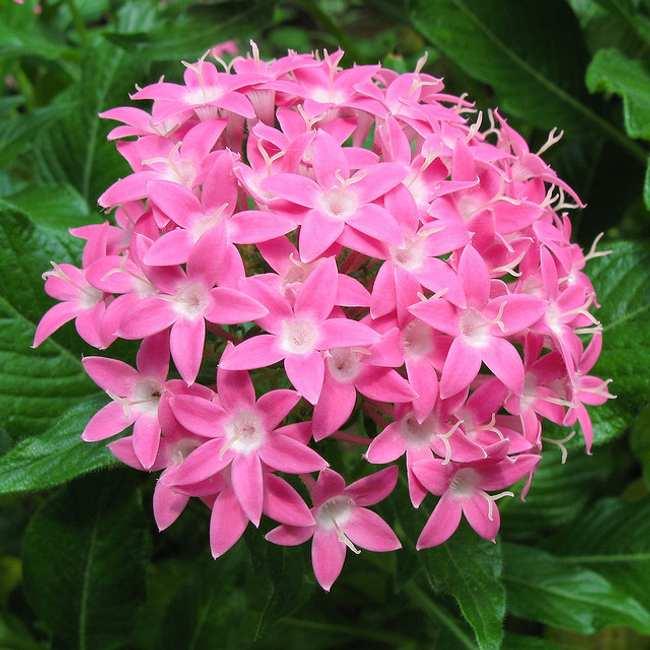Plantas que florecen todo el a o - Cuales son las plantas con flores ...