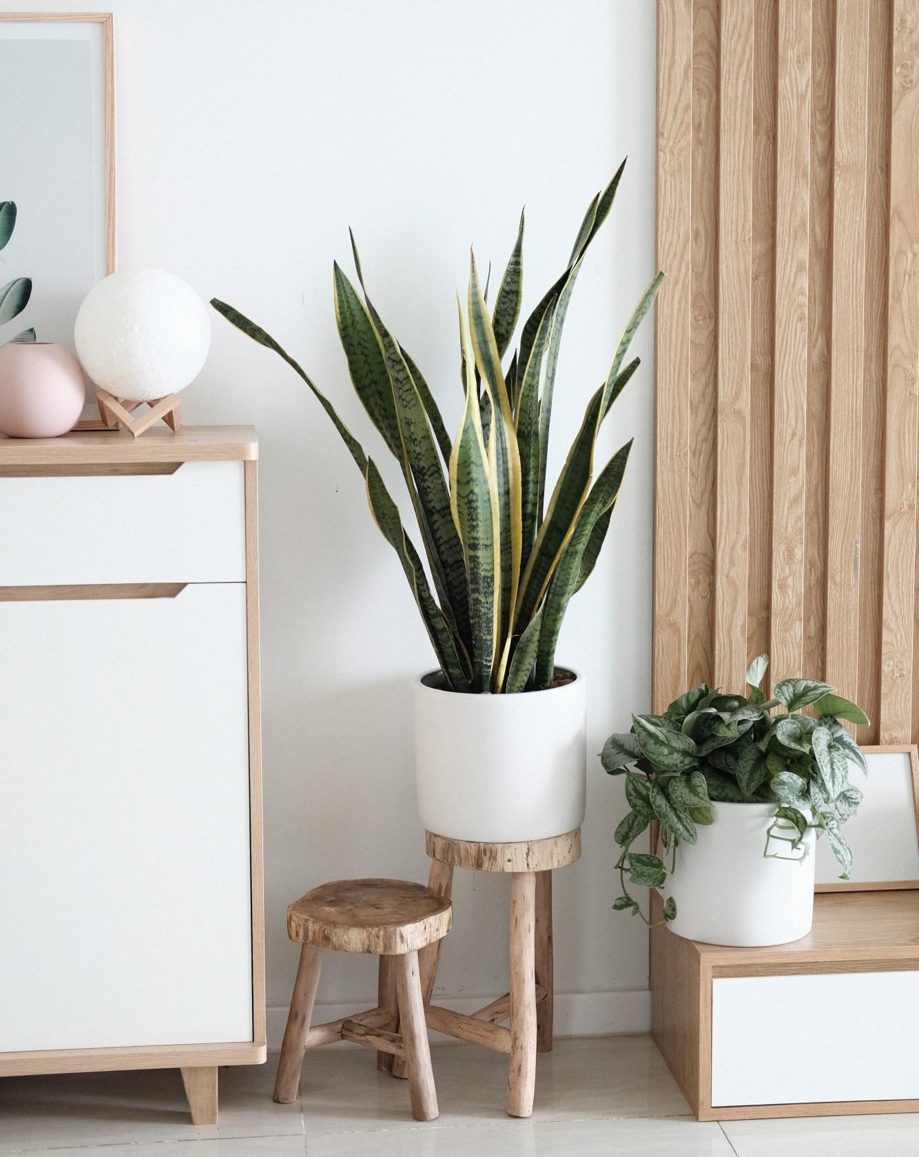 tips para decorar simples