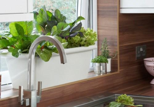 1311267856_plantas_cocina