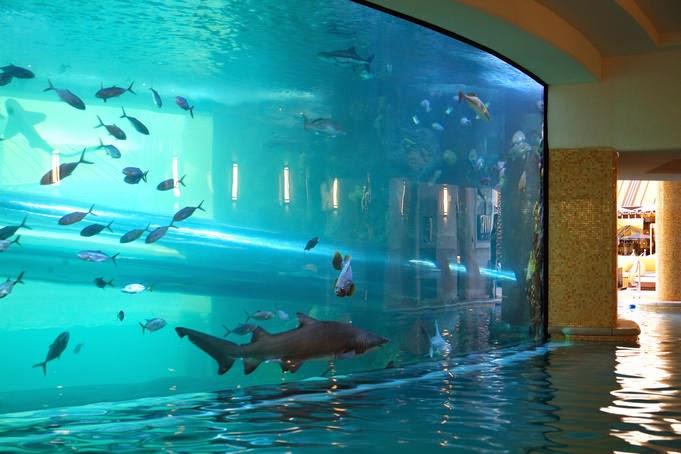 exotixc-swimming-pools9