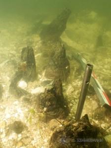 Pieux en zone de pêcherie médiévale
