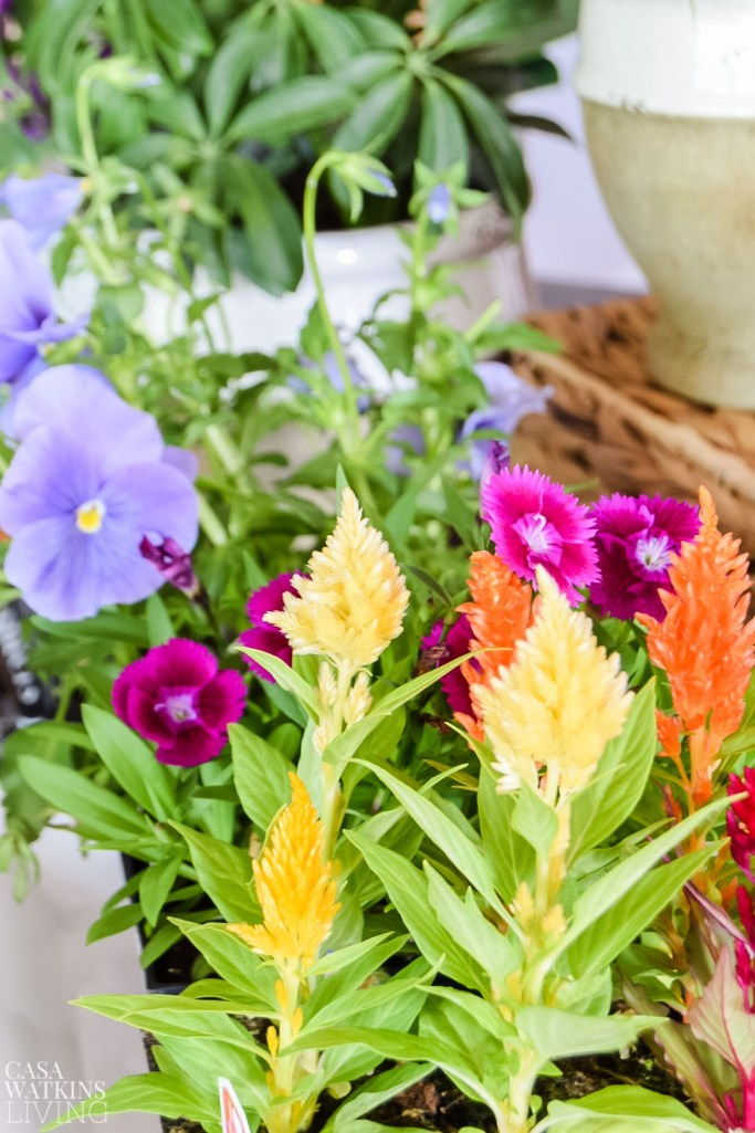 diy mother's day flower basket idea