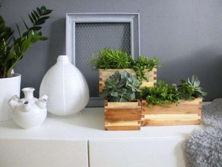 Decorar con plantas de interior la casa. – Revista Liliana