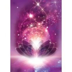 Solar Violet Flame  59474 1