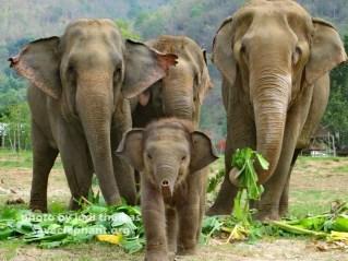 baby-elephant-navann-3