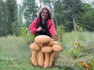 Anna demonstrating her Alaska Gold or Golden Mushrooms.