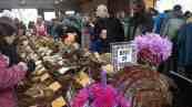 Mushroom Festival 2014