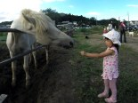 A young girl feeding grass to one of the horses at the neighboring farm. The farm is right on the edge of the park and is open to the public during the festival for rides and pets.