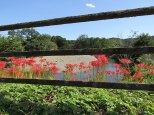 A view of the Koma River with red spider lilies growing beside the bridge.