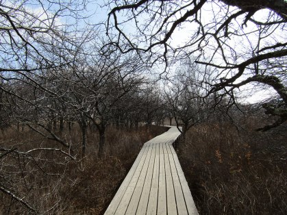 A bare stretch of the Senjogahara Hiking Trail