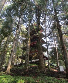 The five-storied pagoda peeks through the trees