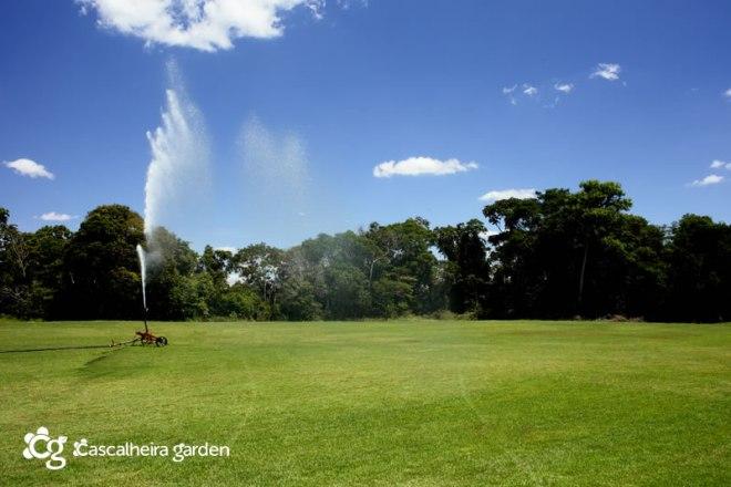 Grama Esmeralda em Tapete - Cascalheira Garden - Jardinagem e Paisagismo Camaçari