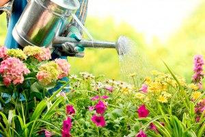 garden - Cascalheira Garden - Jardinagem e Paisagismo Camaçari
