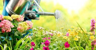 O que você precisa saber antes de comprar a grama do seu jardim?