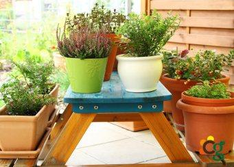 Vasos e Cachepôs para seu Jardim - Cascalheira Garden - Jardinagem e Paisagismo Camaçari
