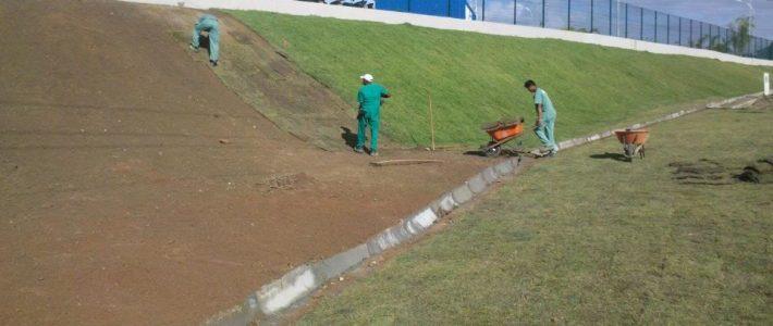 Qual a importância da grama esmeralda no projeto paisagístico?