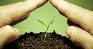 Como utilizar produtos naturais para combater as pragas?
