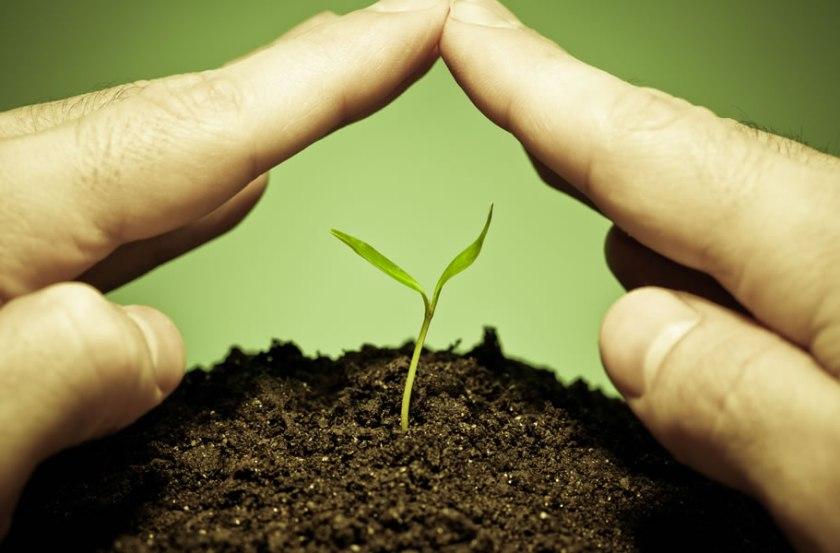 Como utilizar produtos naturais para combater as pragas? - Cascalheira Garden - Jardinagem e Paisagismo Camaçari