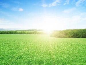 grama-esmeralda-no-verao - Cascalheira Garden - Jardinagem e Paisagismo Camaçari