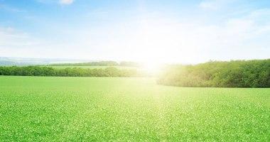 Como cuidar da grama no verão