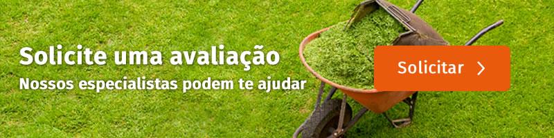 O que você precisa saber antes de comprar a grama do seu jardim? - Cascalheira Garden - Jardinagem e Paisagismo Camaçari