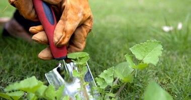 Pragas e ervas daninha em gramas