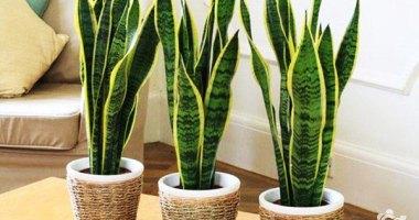 Tipos de podas em plantas ornamentais
