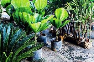 Plantas-Ornamentais---Cascalheira-Garden---Paisagismo-e-Jardinagem - Cascalheira Garden - Jardinagem e Paisagismo Camaçari