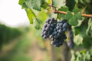 Neive wine producers