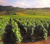 Burgundy region