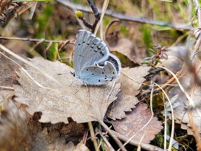 Butterfly in the taiga