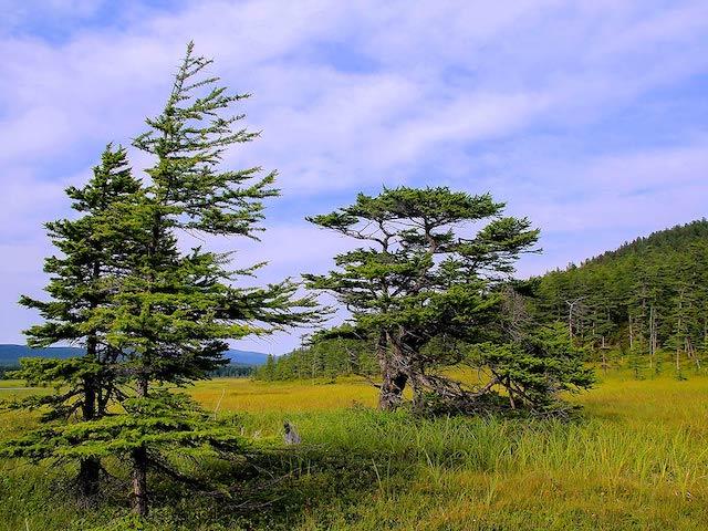 Shantar meadow