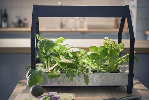 Une serre pour jardiner dans sa cuisine