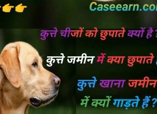 कुत्ते चीजों को क्यों छुपाते हैं? Why do dogs hide things? कुत्ते अपने भोजन और खिलौने क्यों छुपाते हैं?