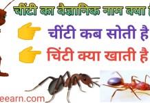 चींटी की जीवन की आयु कितनी होती है ? Chinti ki umra kitni hoti hai .